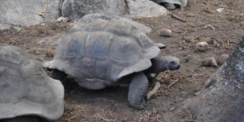 Walking turtles