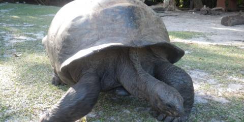 Walking turtle in motion